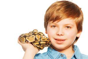 Ball Python with boy